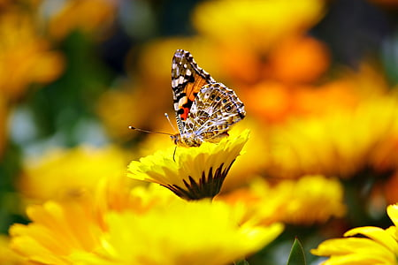 selective focus photography of butterfly on yellow petaled flower