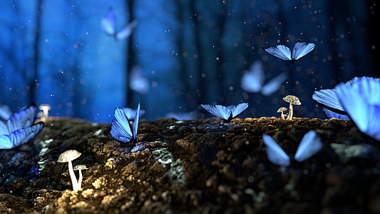 blue butterflies photo