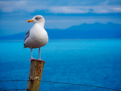 white seagull standing on brown wooden dock
