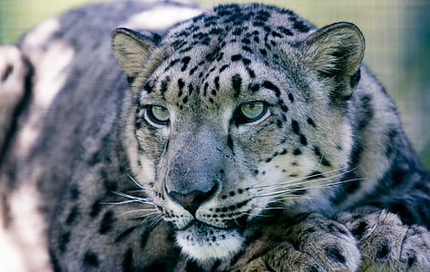 close up photo of leopard
