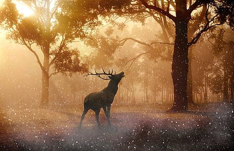 brown buck deer
