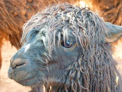 selective focus photography gray camel