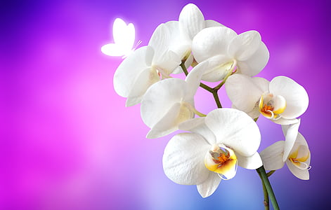 selective focus photography of white moth orchid