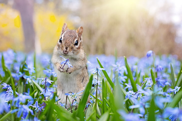 squirrel with blue petaled flowers