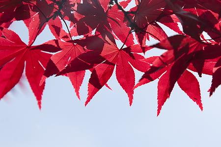 red leaf close up photo