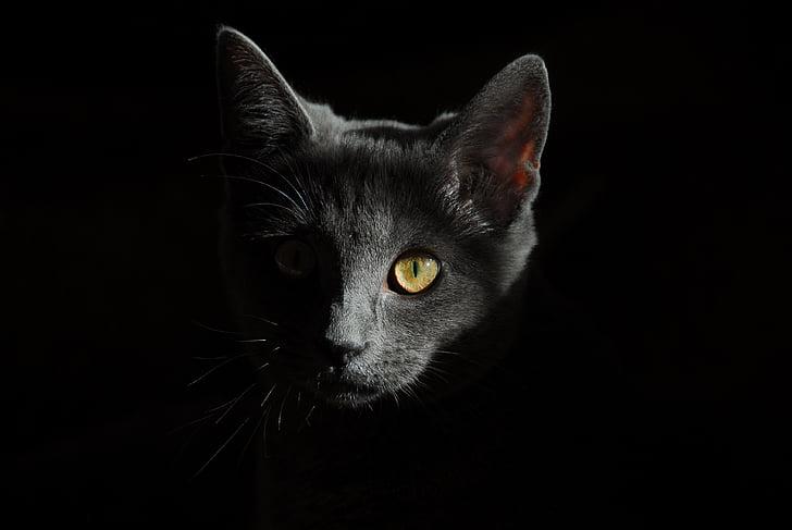 portrait photography of black car on dim light