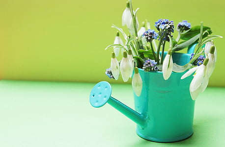 teal watering can with white flowers