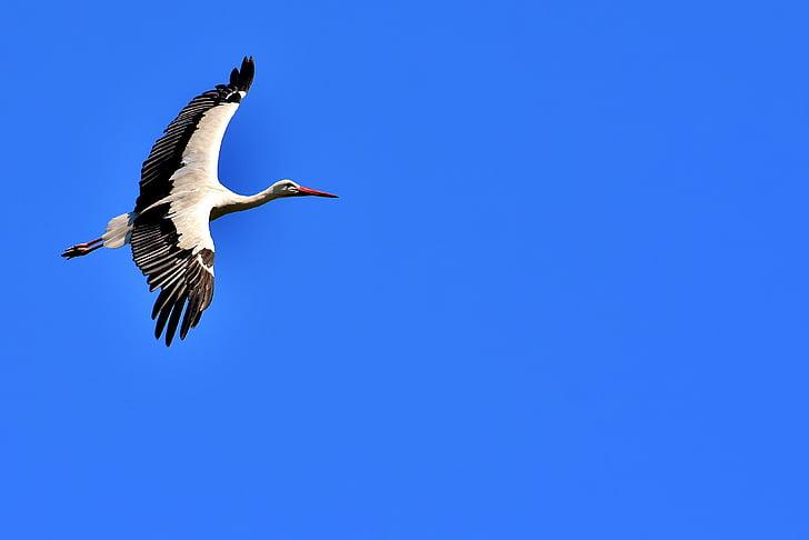 white and black crane in mid-flight