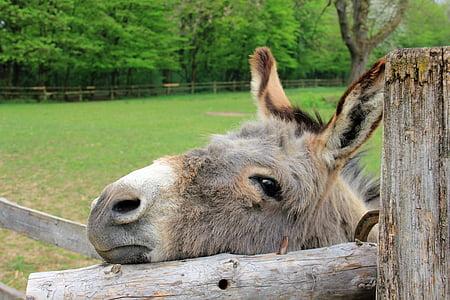 donkey leaning on fence