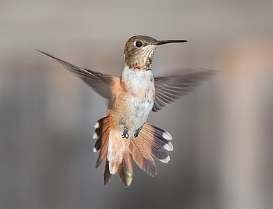 focus photography of brown hummingbird