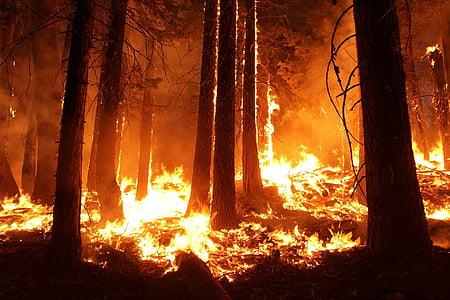 forest fire wallpaper
