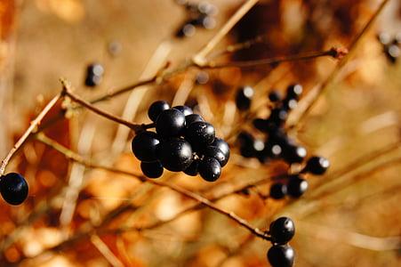 selective focus photograph ofround black fruit