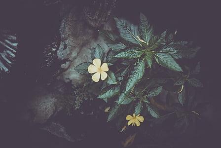 yellow 5-petaled flowers