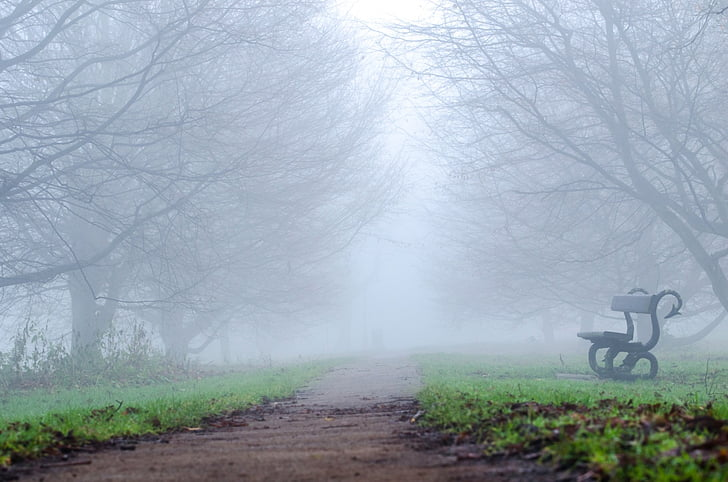 black and white bench beside dirt road under by fogs