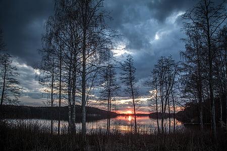 leafless tree under gray sky near body of water
