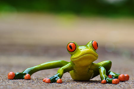 selective focus photography of green-and-red eye frog