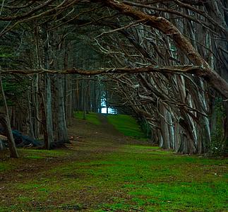 pathway between woods