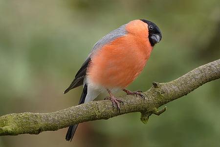 orange bird outdoor