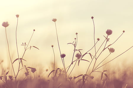 flowering weeds in sepia photography