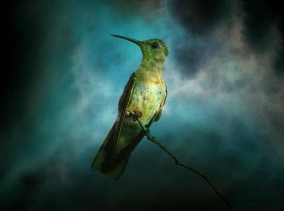 green bird digital wallpaper