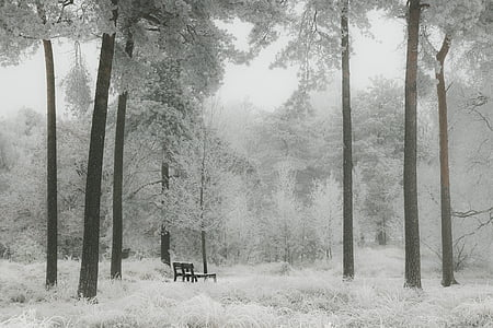 brown bench seat inside the forest