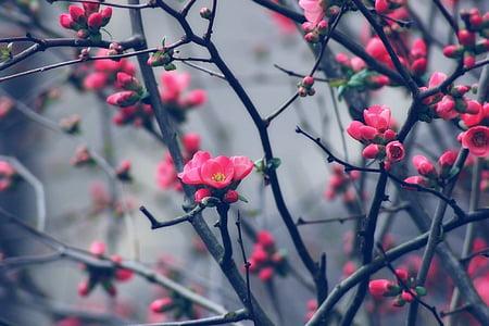 pink petaled flowers on focus photo