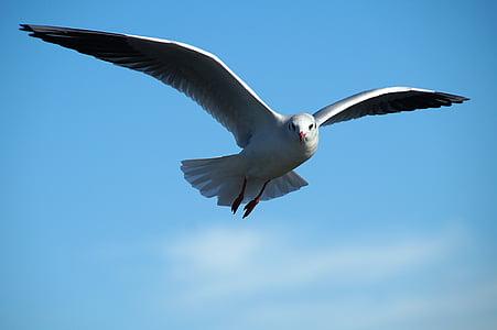 gray bird on flight