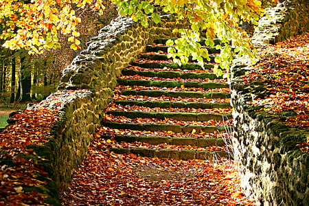 gray concrete pathway with falling leaves