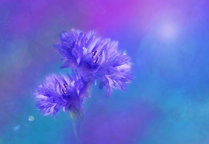 purple cornflowers painting