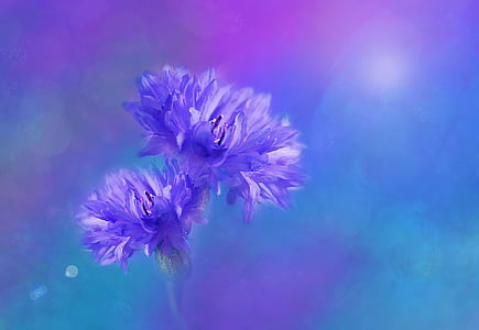 purple cornflowers painting