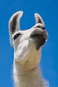camel under sunny sky