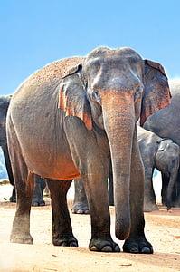 macro shot of gray elephants