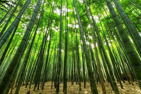 bamboo grassfield