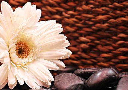 white petaled flower with black stones