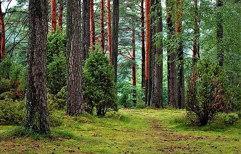 green leaf trees
