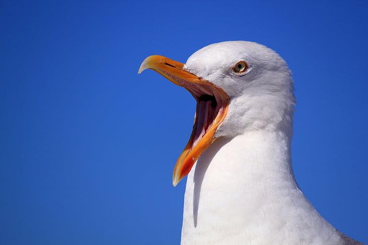 white seagull bird