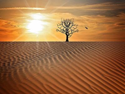 silhouette tree on desert illustration