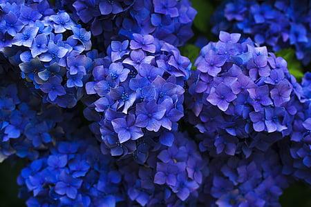macro shot of purple flowers
