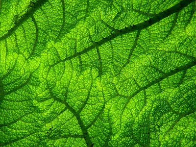green leaf cloth