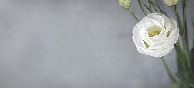 white lisianthus closeup photo