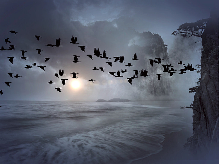 flock of raven during stratocumulus clouds