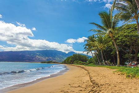 green palm trees near beach