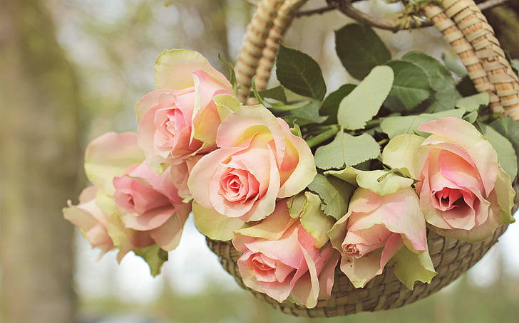 closeup photo of pink rose arrangement