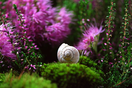 close up photography of garden snail with cluster petaled flowers