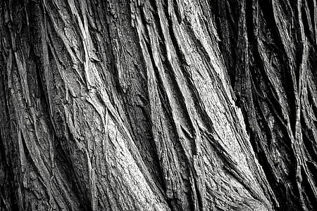 closeup photo of gray tree trunk
