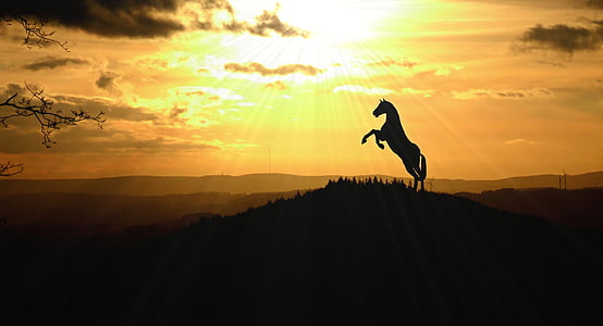 silhouette photo of horse during golden hour