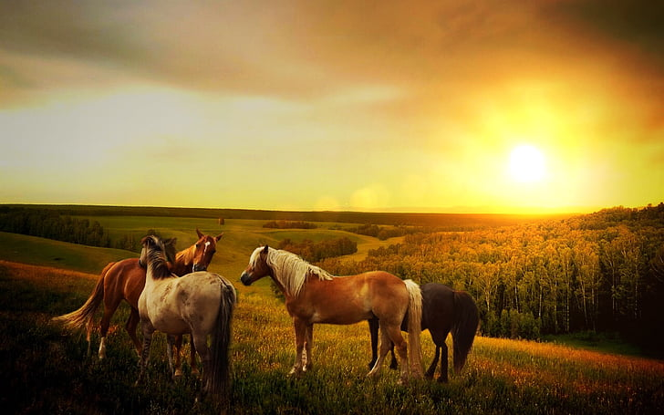 four assorted-color horses during sunset