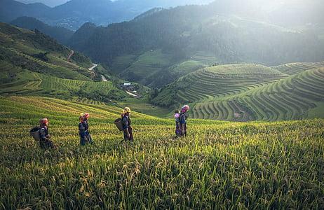 four people walking on cornfield