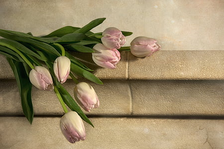 pink tulips on grey concrete