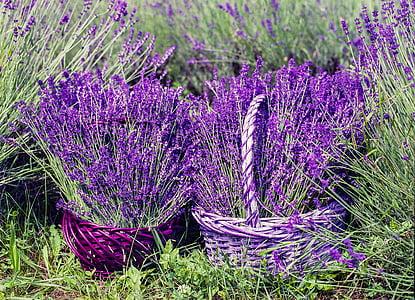 lavender on baskets